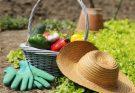 Работы в саду и огороде в августе