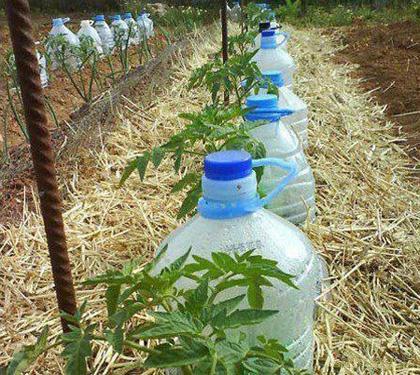 Техника и инструменты для дачи: Капельный полив при помощи пластиковых бутылок