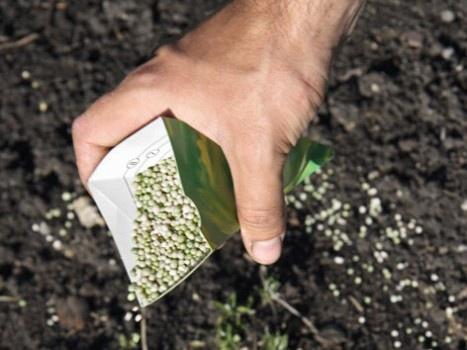 Декоративные растения: Удобрение форзиции