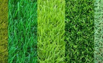 Разновидности газонов