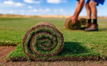 Выращивание рулонного газона своими руками
