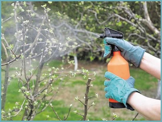 чем опрыскивать деревья