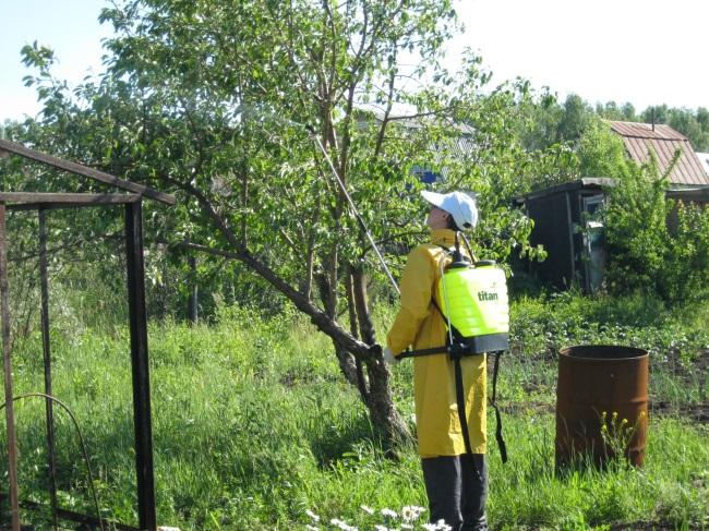 Обработка плодовых от вредителей весной средствами защиты