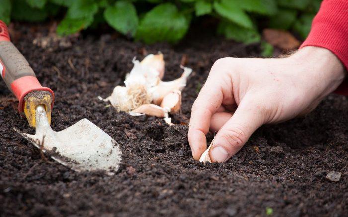 Что нужно знать садовнику и огороднику
