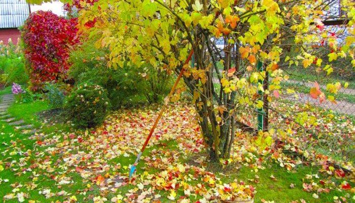 Работы на дачном участке в октябре обработка сада