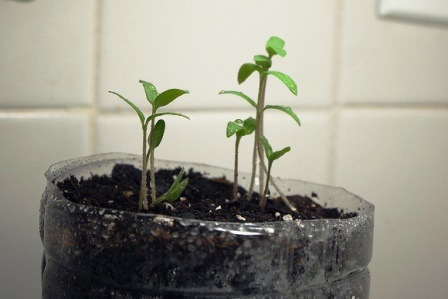 semena-v-butyli