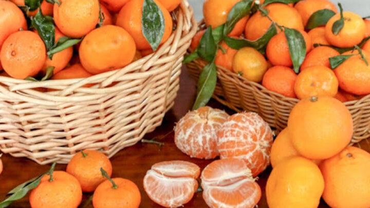 Гибриды апельсина и мандарина