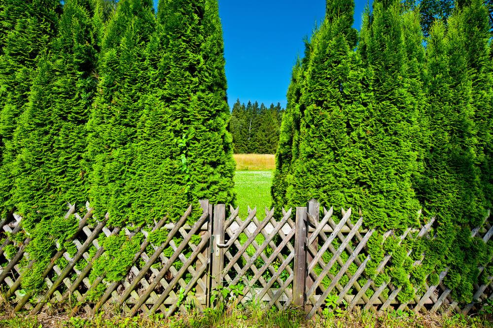 Деревянный забор с зеленью