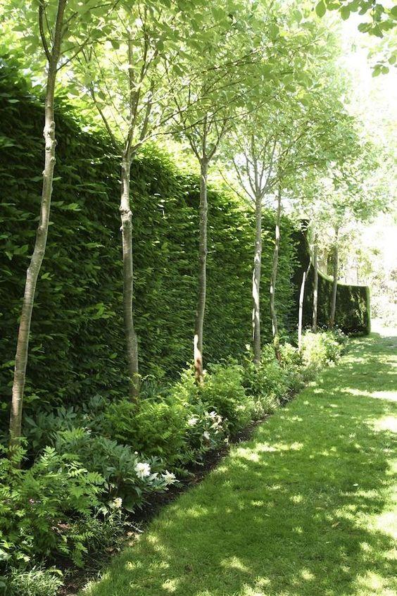 Забор с зеленью