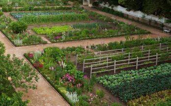 Дизайн сада огорода