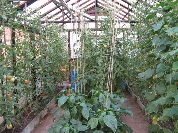 Растения в теплице