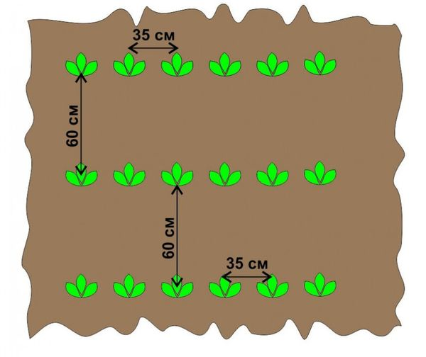 Схема посадки картофеля мотоблоком