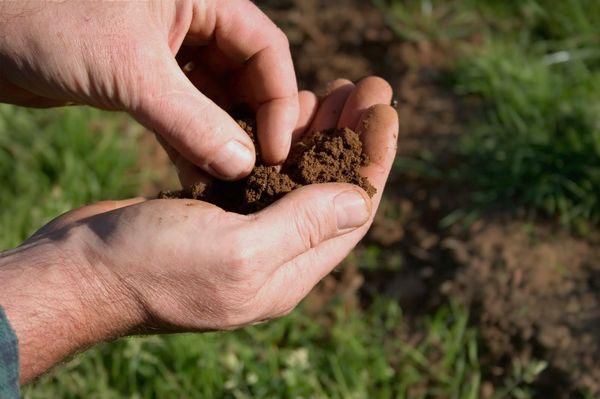Определение состава почвы можно провести руками