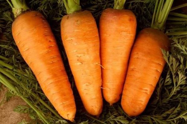 Морковь Шантене
