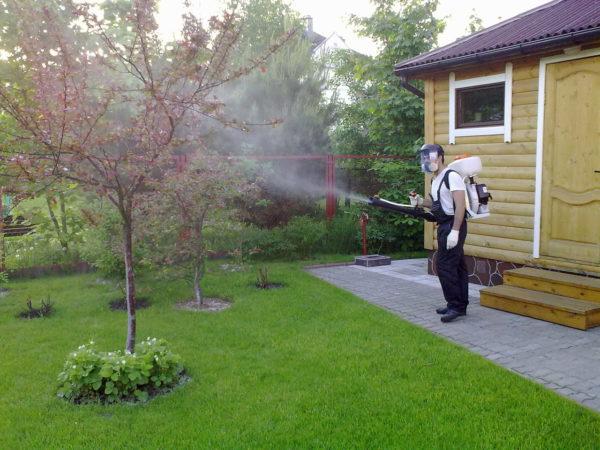 Опрыскивание цветущего дерева
