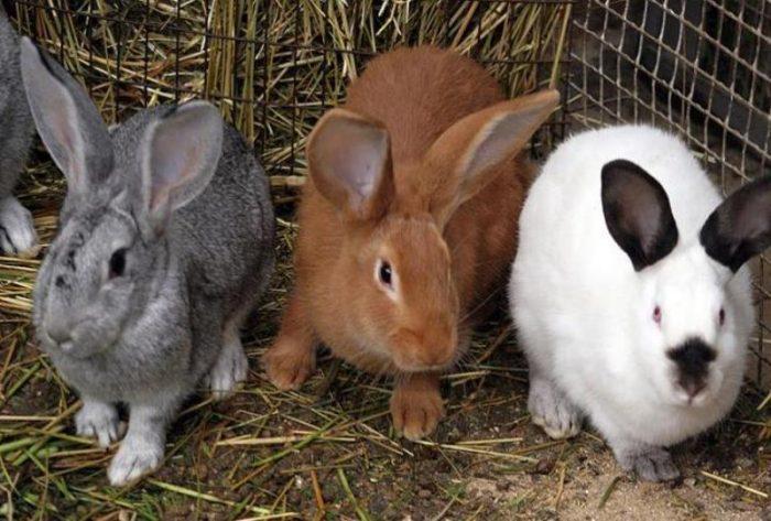 Разные породы кроликов