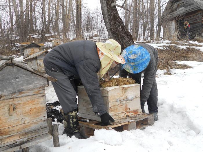 Когда выносить пчел из зимовника
