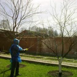 Обработка дерева защитной смесью