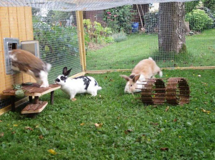 Разведение кроликов на даче