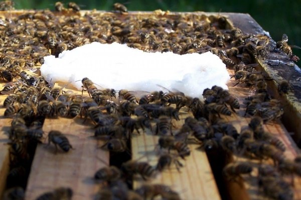 Весенняя подкормка пчел молоком