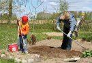 Работа в саду и на огороде в апреле