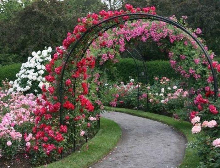 Арка с розами