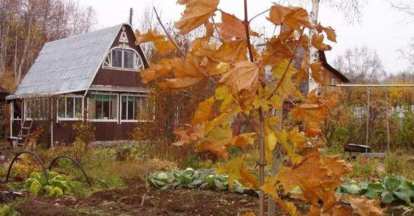Уход за садом в ноябре