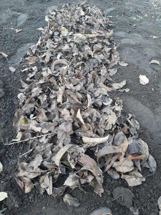 Насыпаем укрывной материал для зимнего лука