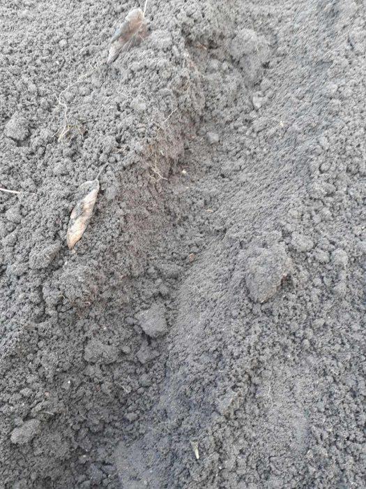 Борозды на грядках для посадки озимого лука