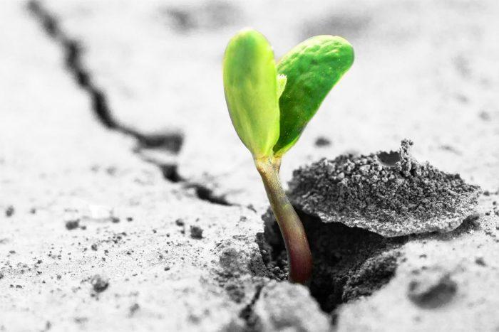Пробившийся из земли росток