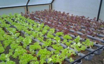 Выращивание зелени и овощей круглый год в теплице