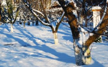 Зимние работы в саду и на участке