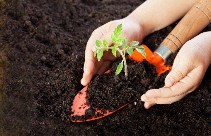почва под томаты