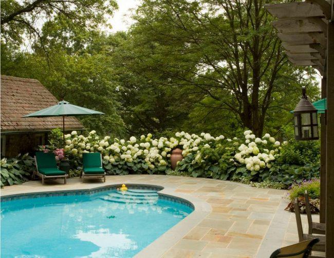 Хоста украшает территорию дома с бассейном