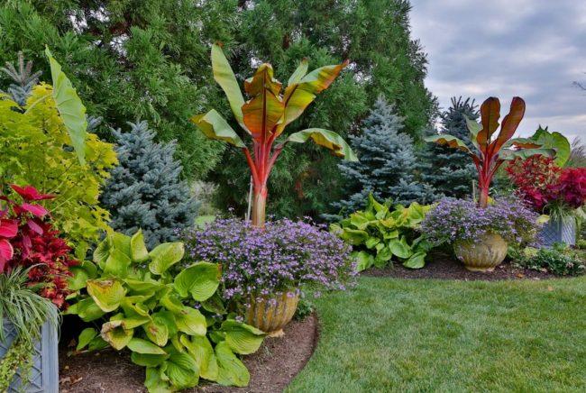Хоста в оформлении тропического сада в загородном доме
